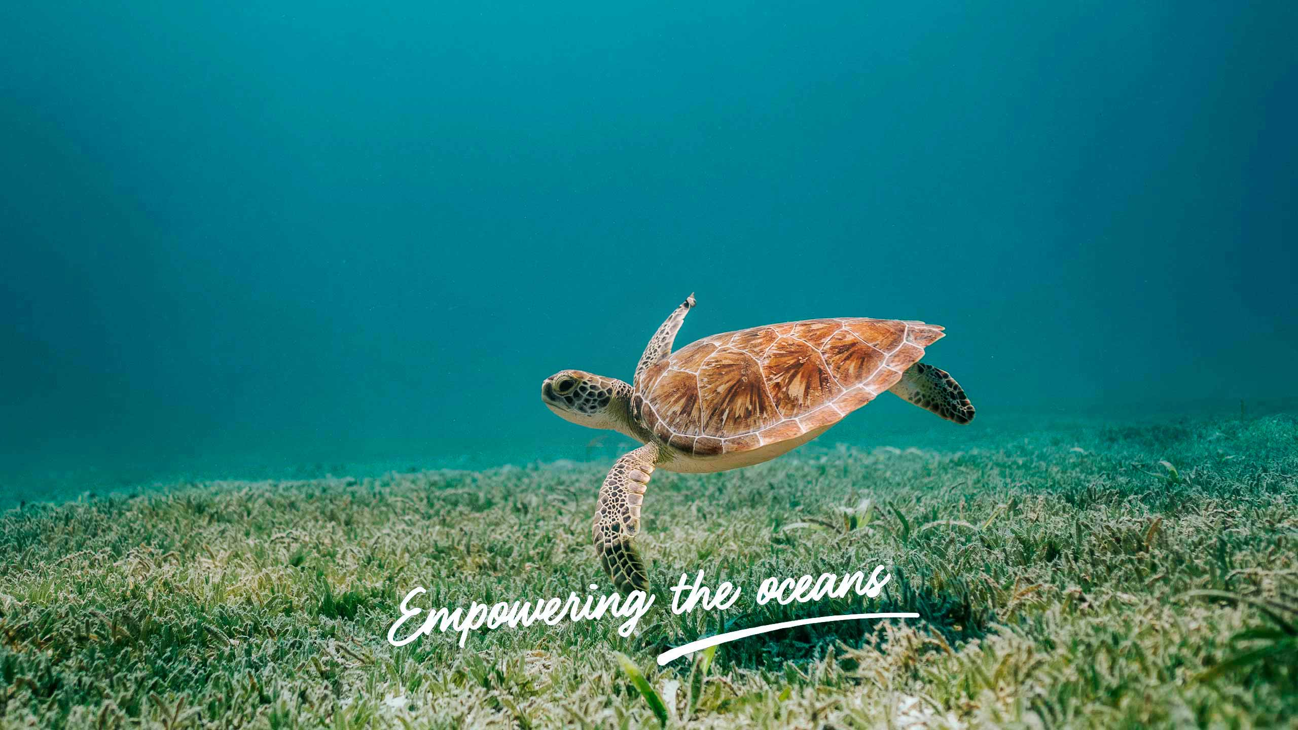 video empowering the oceans
